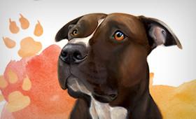 Straydog Foundation poster and flyer